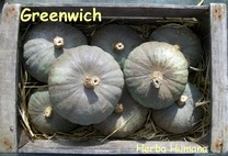 Courge Greenwich